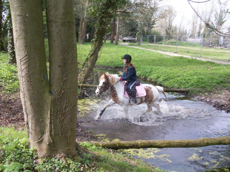 DECOUVERTE PONEY APRES MIDI