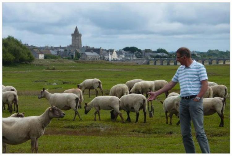 Grévin, agneau des prés salés PB
