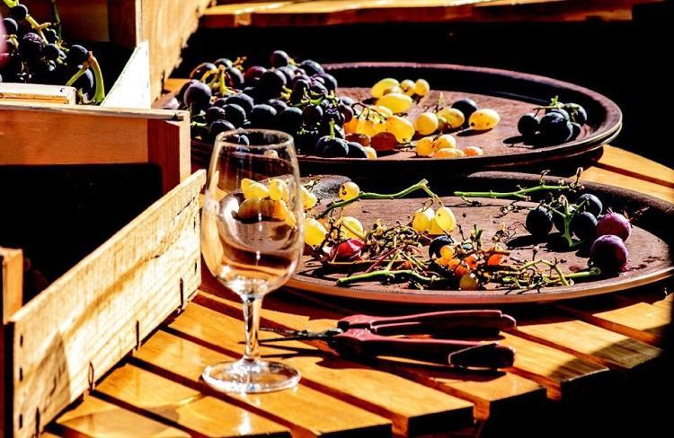 Le Clermont viticole