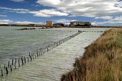 Photo de Balade Nature Tout Public : Scènes printanières au royaume du sel