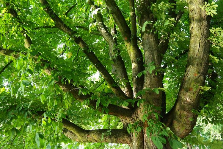 Rencontre avec les arbres (5km)