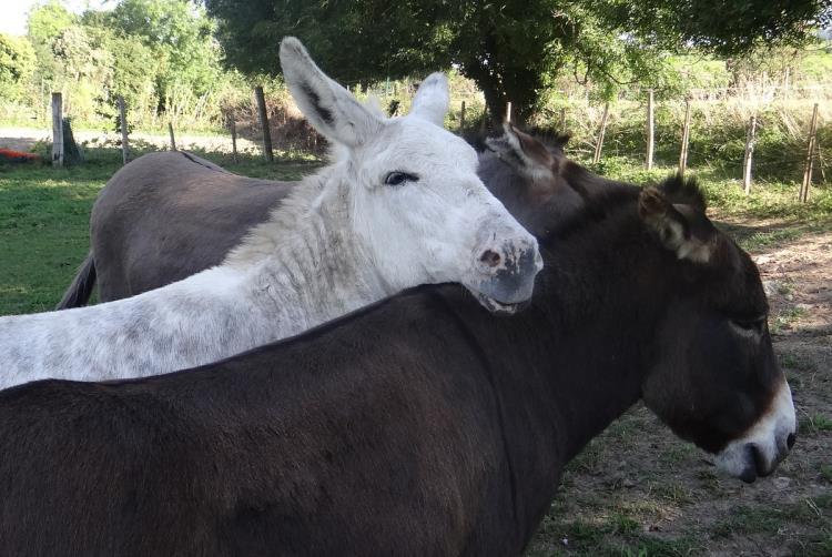 Médiation asine: 3 ânes pour découvrir le Bois des Roches et la carrière (3 km)