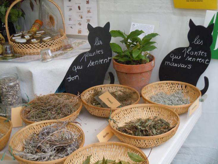 Jardinage et cuisine des aromatiques