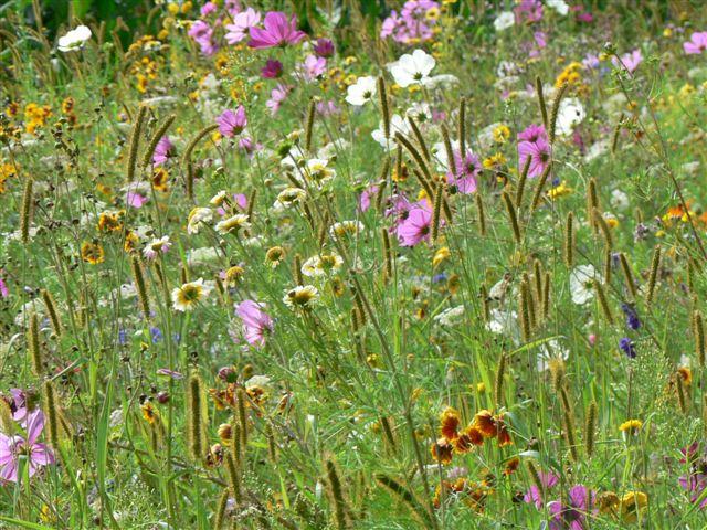 Les plantes en famille (4 km)