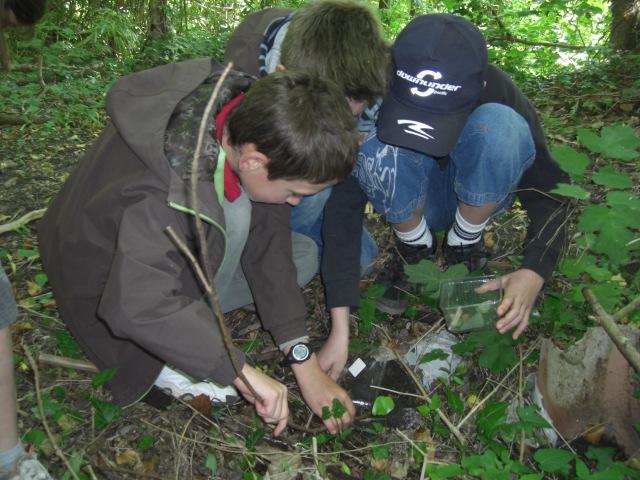 A la découverte des amphibiens, grenouilles, crapauds et autres tritons