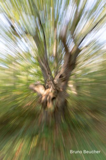 Photographie : Dis ! Photographies-moi un arbre.