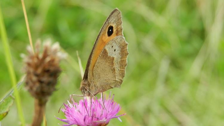 04/07 - Les papillons de la tour du Lay