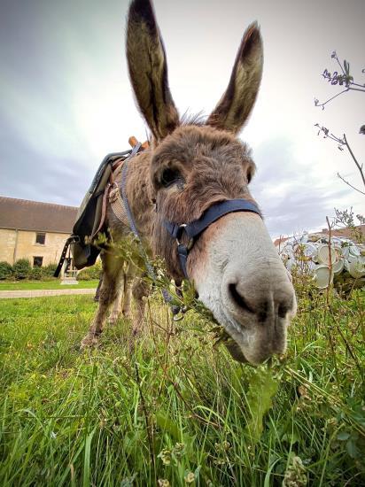 D'un ENS à l'autre : de l'Etang de Vallière au Bois de Noisement, avec un âne (12 km)