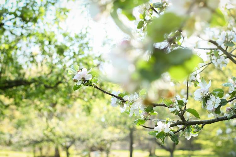 Du nectar au jus : l'utilisation des vergers