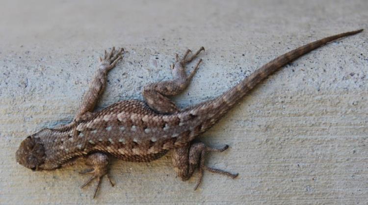 Atelier « À la découverte des reptiles » - Samedi 31 août