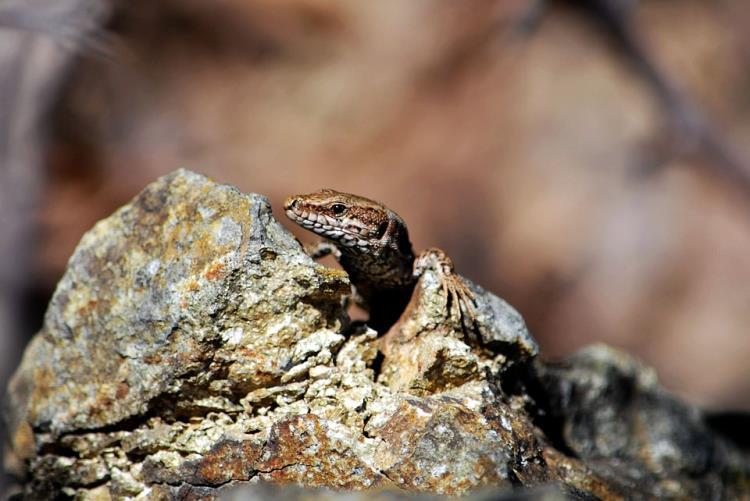 """Atelier enfant """"Un abri pour les reptiles"""" - 3/6 ans - samedi 29 août 2020"""