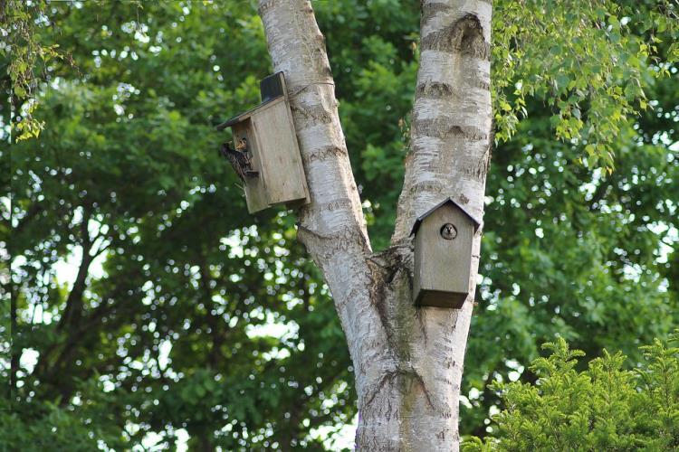 """Atelier enfant """"Un toit pour les oiseaux"""" - 7/12 ans - mercredi 19 août 2020"""