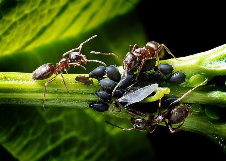 Atelier enfant 7/12 ans - Les insectes, ces petites bêtes !