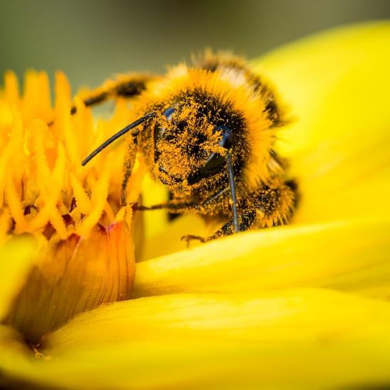 Atelier enfant 3/6 ans - Les cupidons de la pollinisation