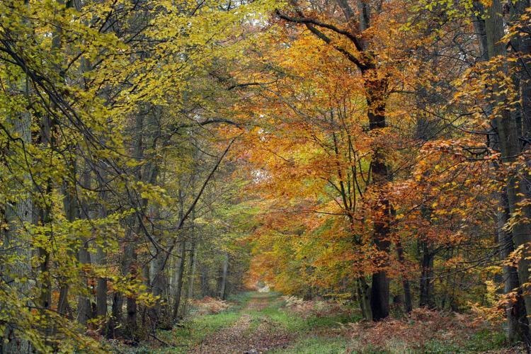 Balade forestière aux couleurs de l'automne dans la Forêt de Coye
