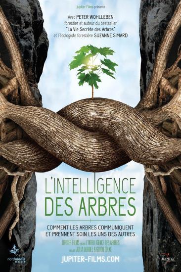 "Film documentaire ""L'Intelligence des arbres"": 13 octobre"